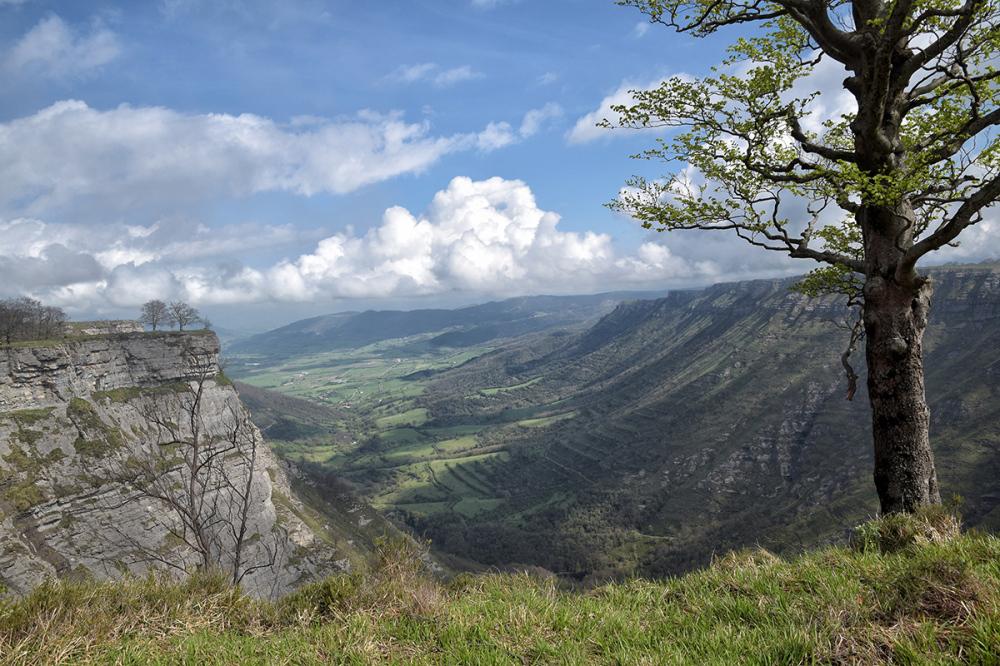 Árbol sobre el valle. Tree over the valley.