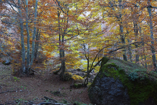 El bosque encantado. The enchanted forest #2