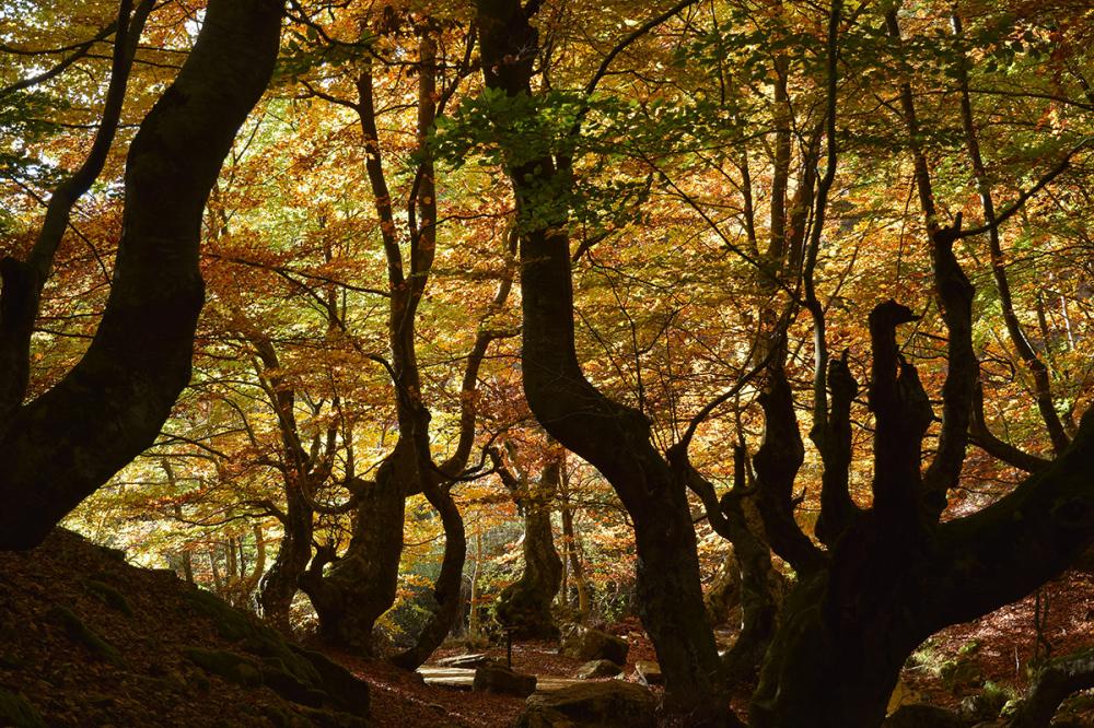 El bosque encantado. The enchanted forest #4