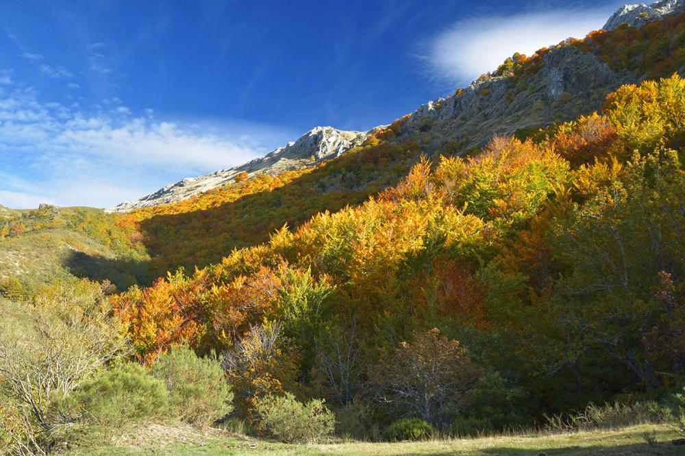 Otoño va llegando. Fall is setting in. #13
