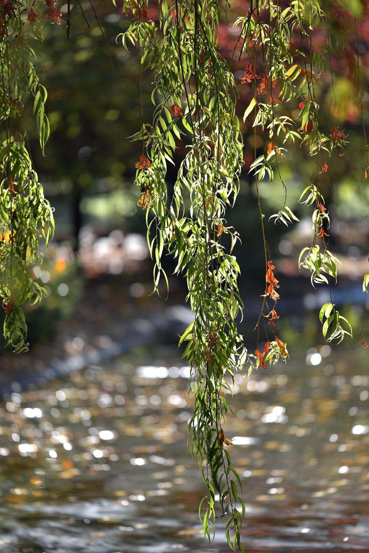 Ramas. Branches