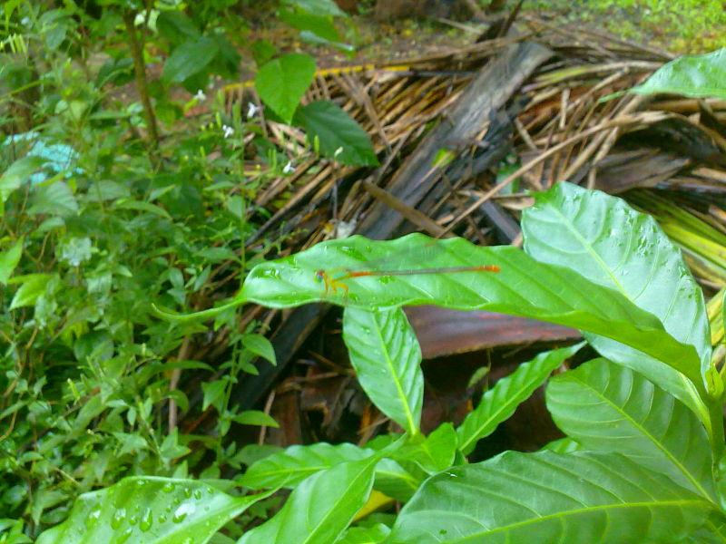 hidden dragonfly