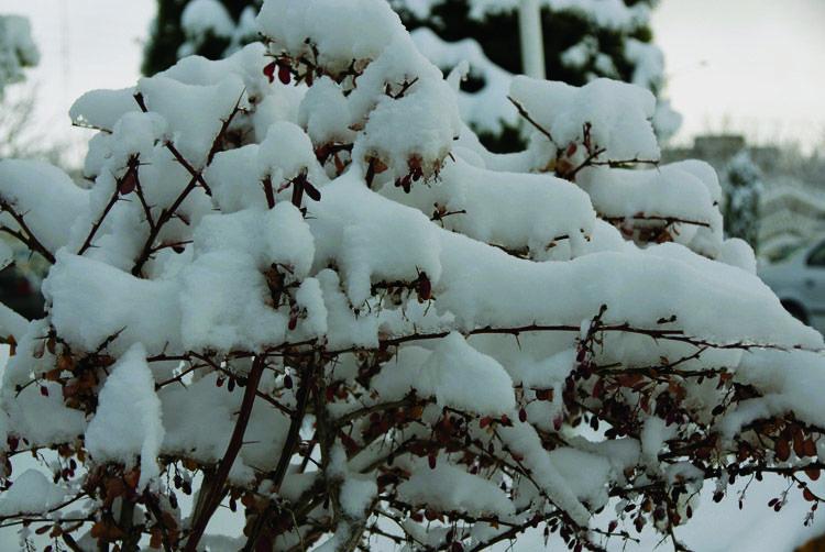 اولین برف بجنورد
