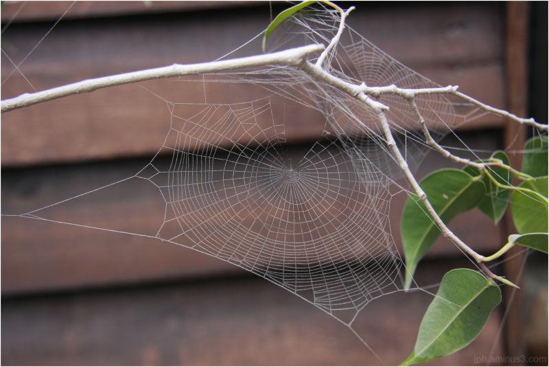 Sur le web...