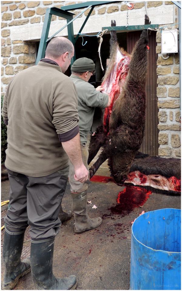 Scène de chasse en Ardenne