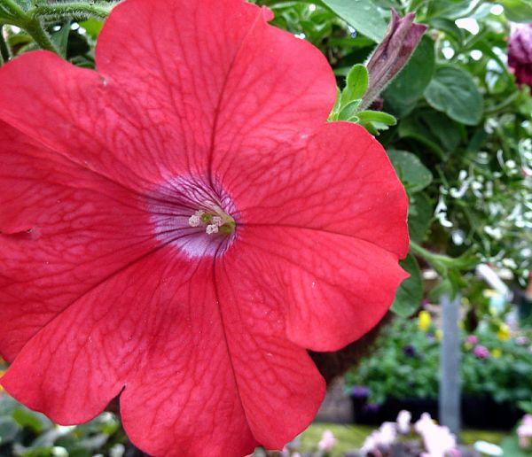 Tropical Plant, Tropical Flower