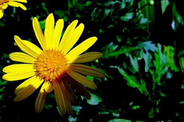 flower, tropical, garden. color