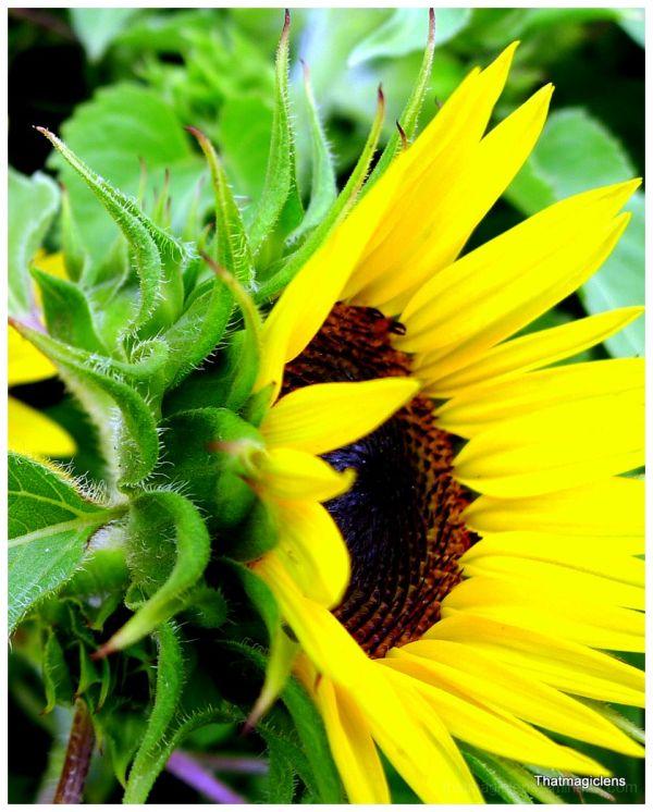 Flower, Tropical, Sung, Garden