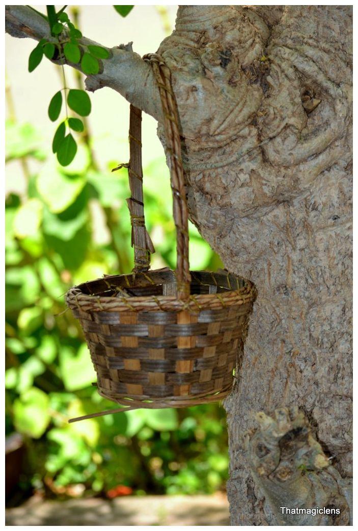 The Old Basket