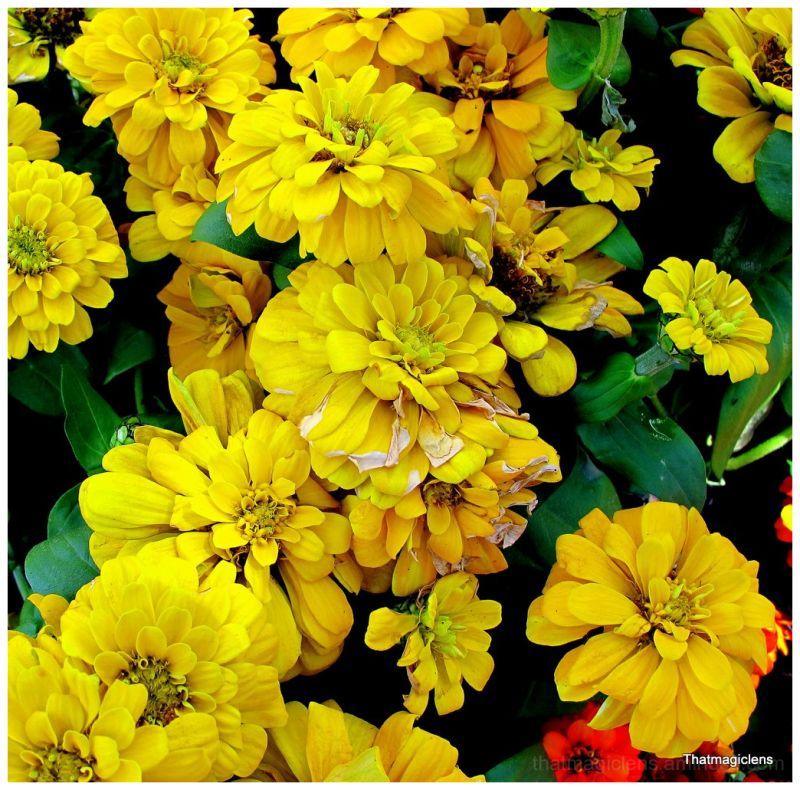 Floresminda