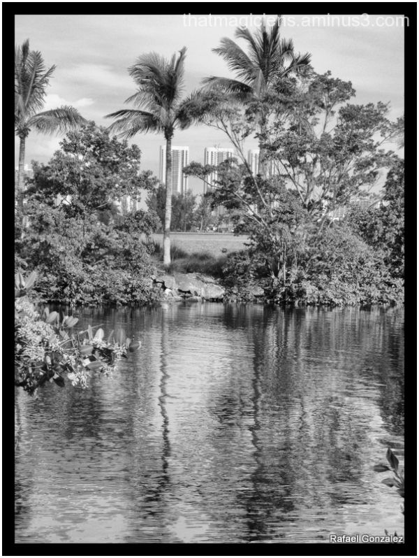 Palms Reflections