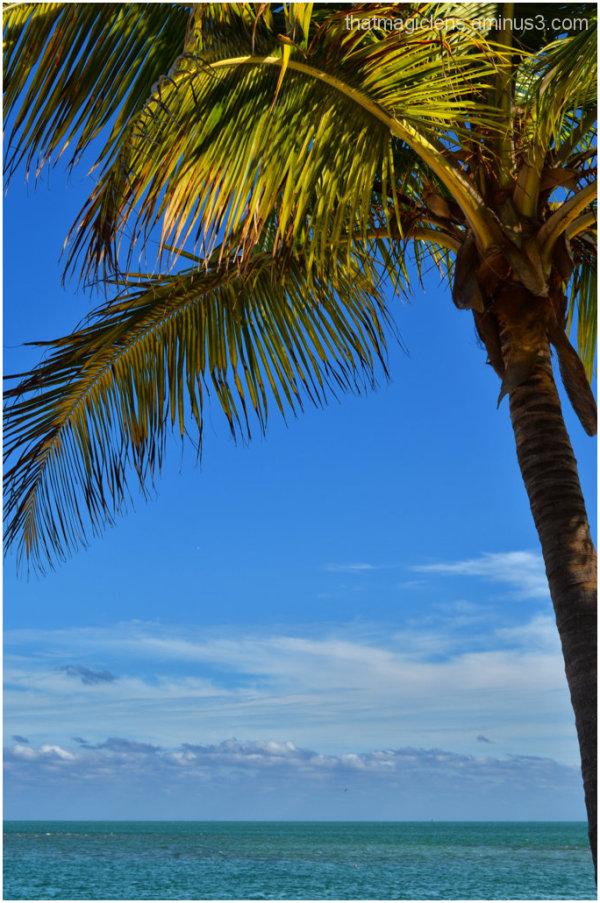 Palm, Water & Sky.