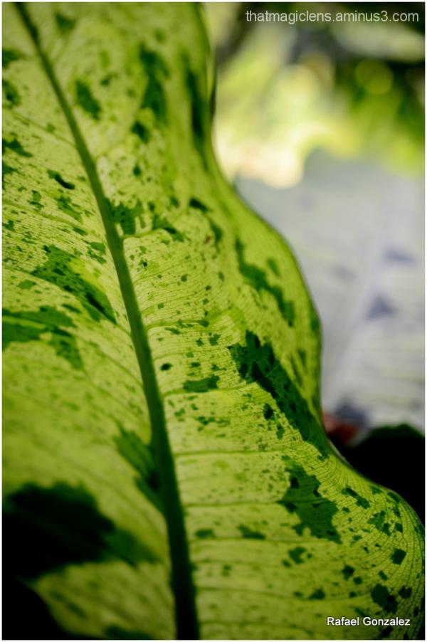Vegetacion III