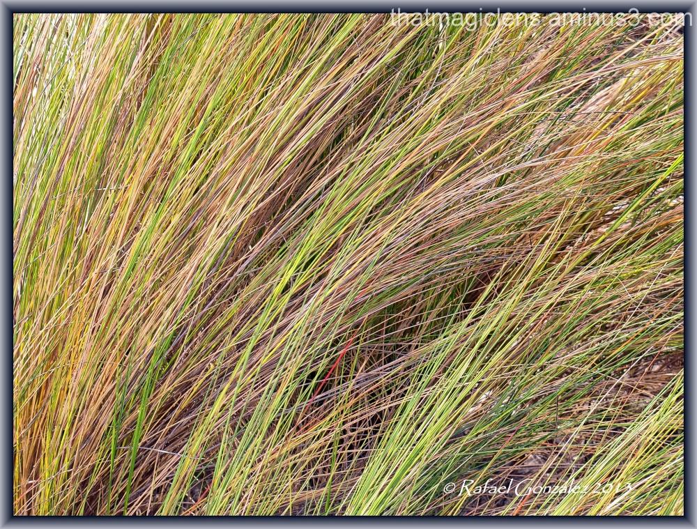 Grass Shades