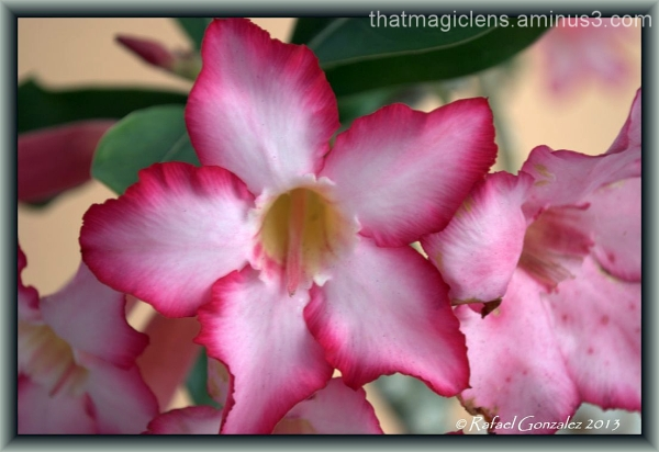 flower, color, tropical, plant