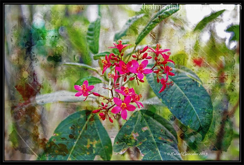 Florecillas 7