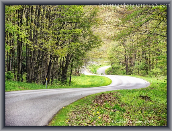 The Roads of Life