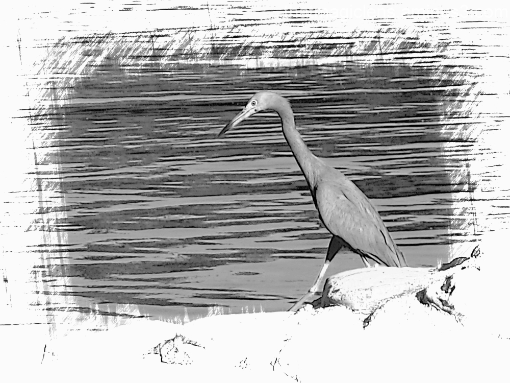 Wildlife at the Keys