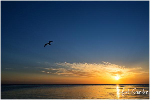 The Seagull Flight
