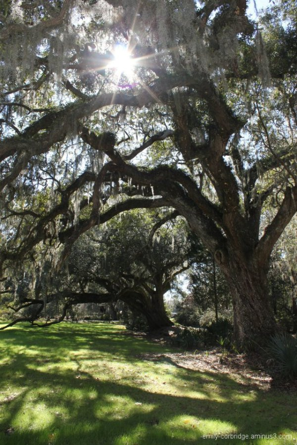 Magnolia Garden pt. 1