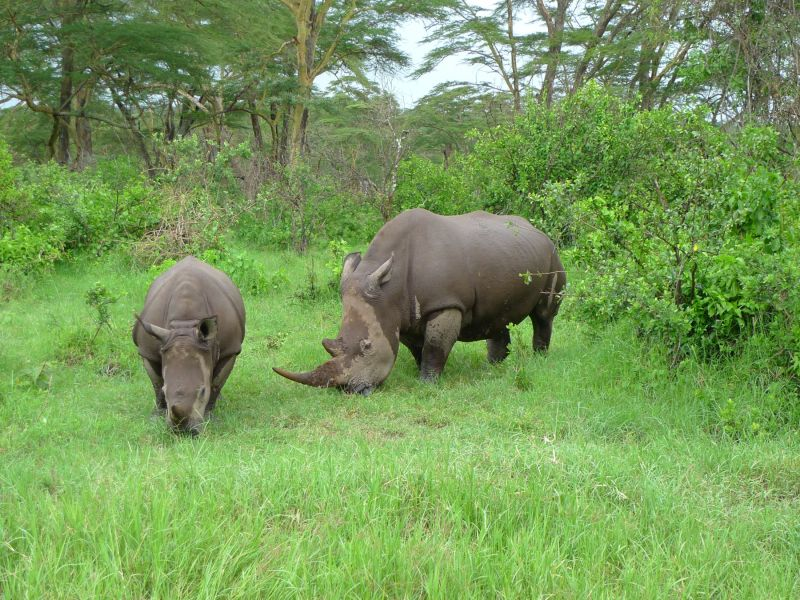 Serie Kenia III: Rinoceronte madre e hija