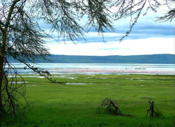 Serie Kenia VII: El lago Nakuru y la marea rosa