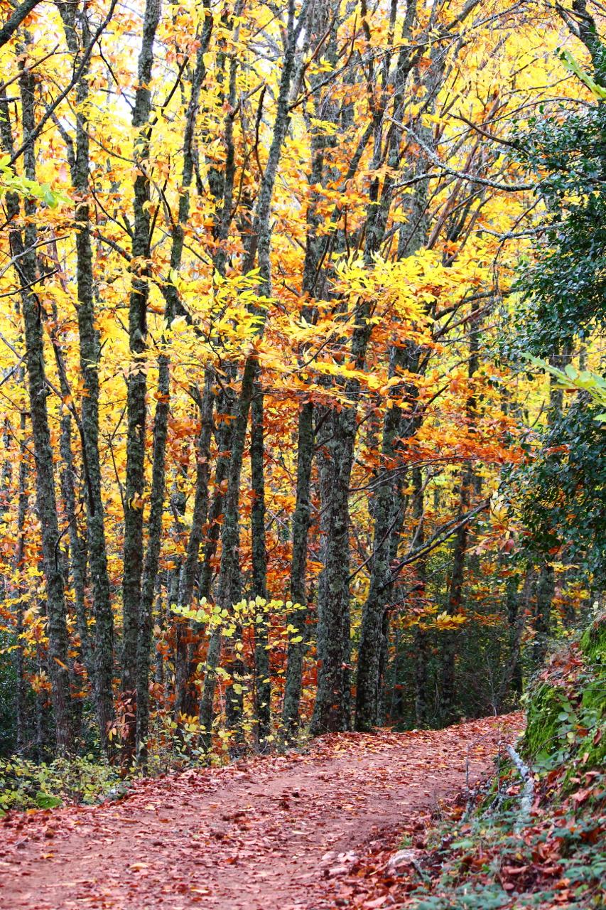El maravilloso colorido del otoño II