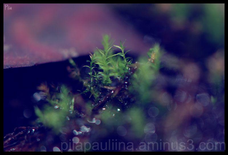 Moss 2.