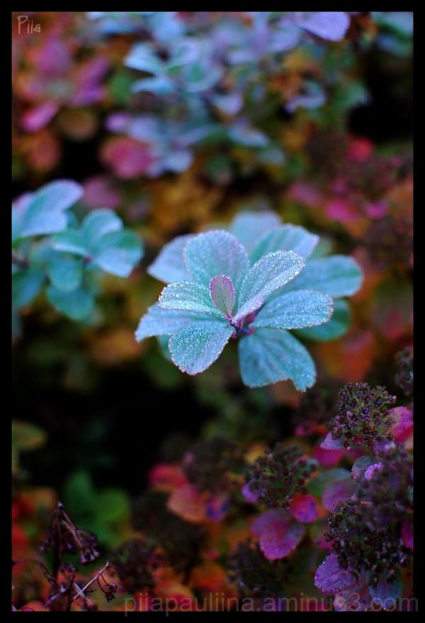 Fall colors III