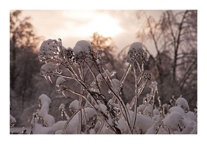 Winter Surprises