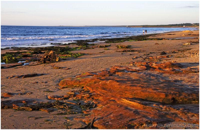 Evening on the North Sea Coast