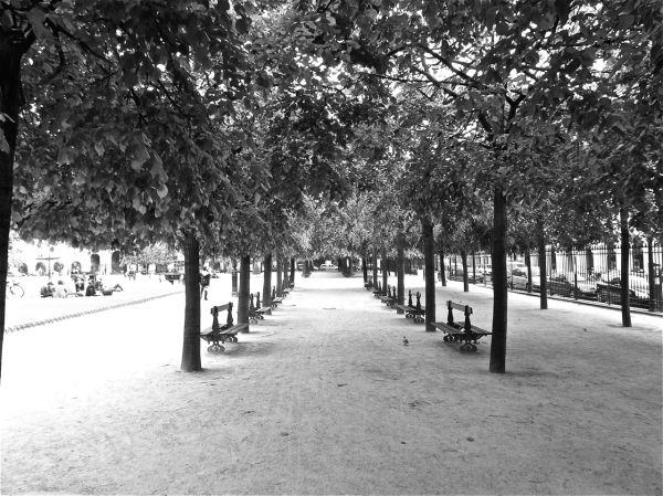 An arrangement of trees and benches in Paris