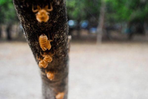 Costa Rica insect husk Santa Rosa National Park