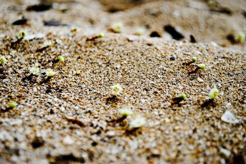 Ants carrying running sand