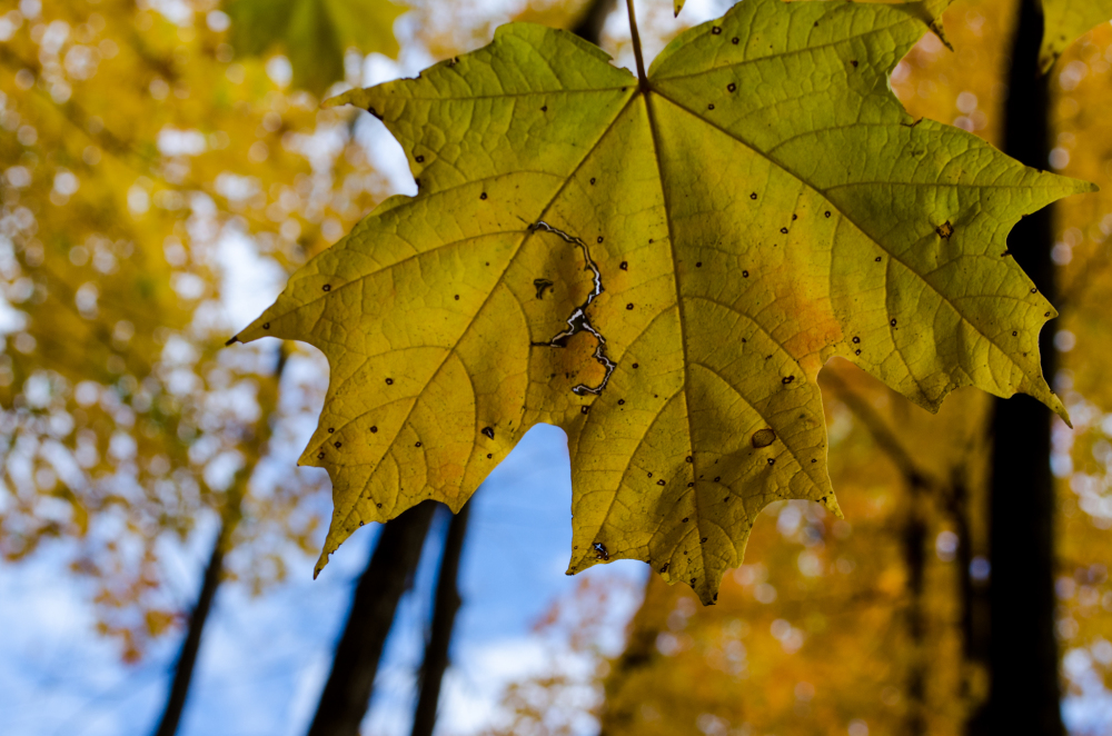 Sky through a leaf