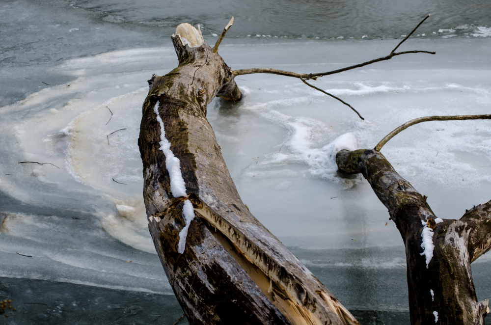 Water, ice and wood