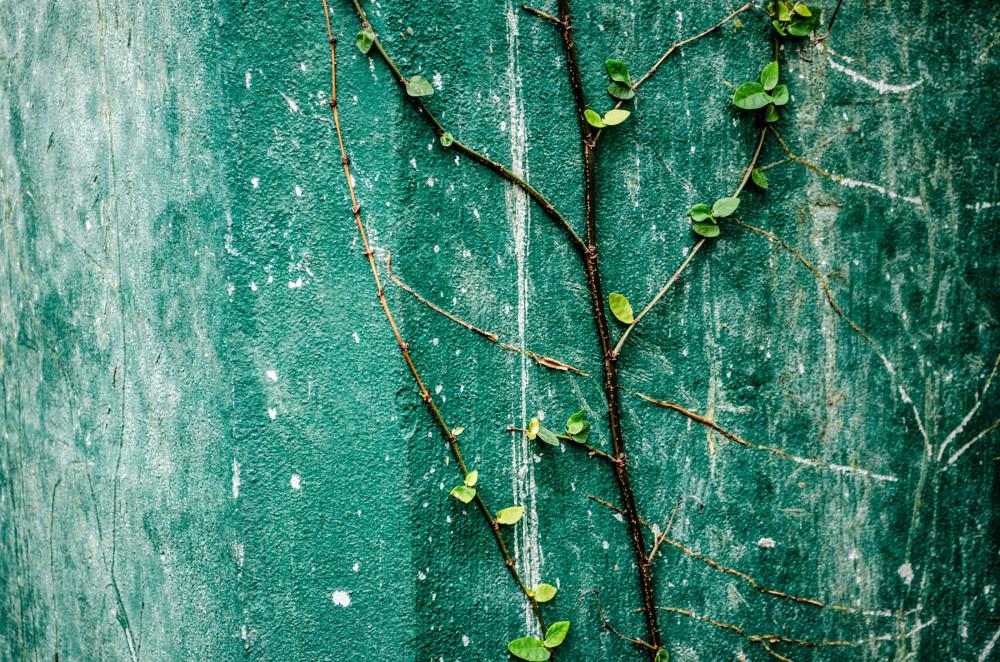 Grow on green