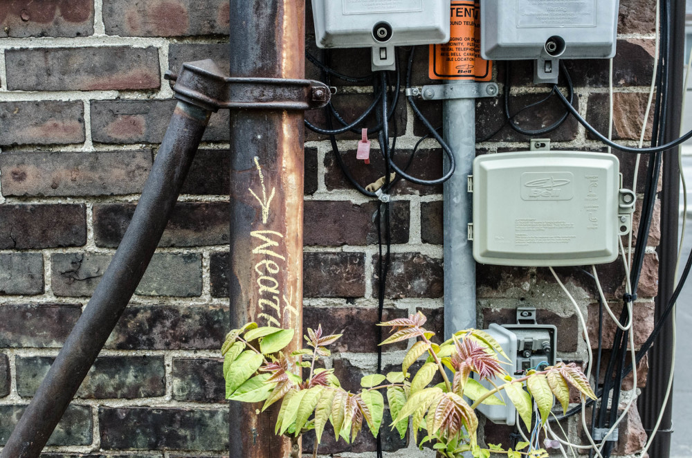Pipes, wires and leaves