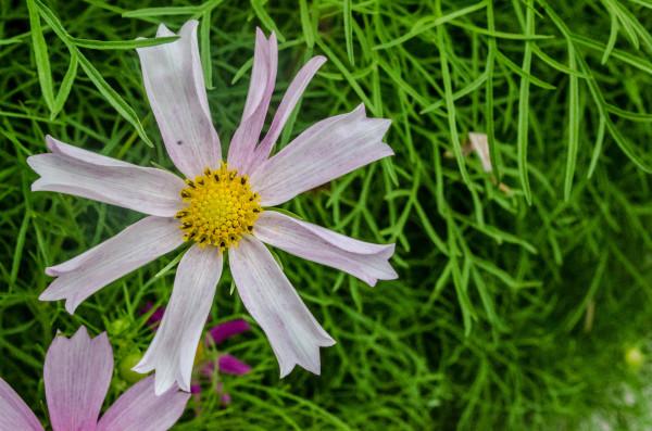 Uneven flower