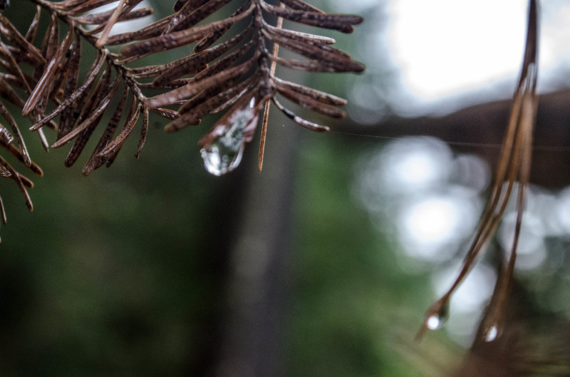 Dried with drops