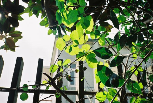sunlight on the leaf
