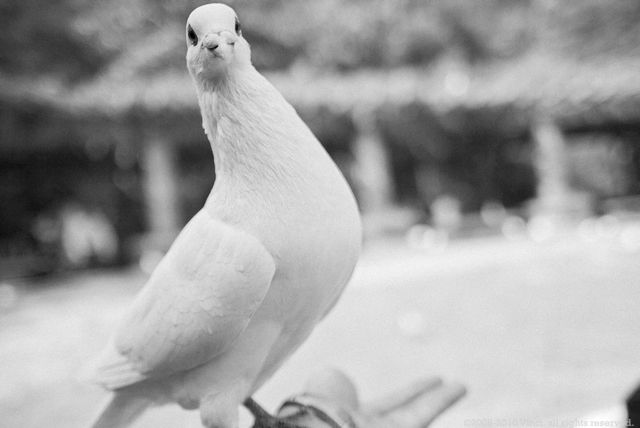 a pigeon standing on my hand