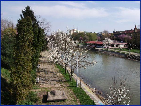 River Bega 2011