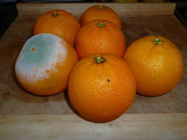 Blue orange