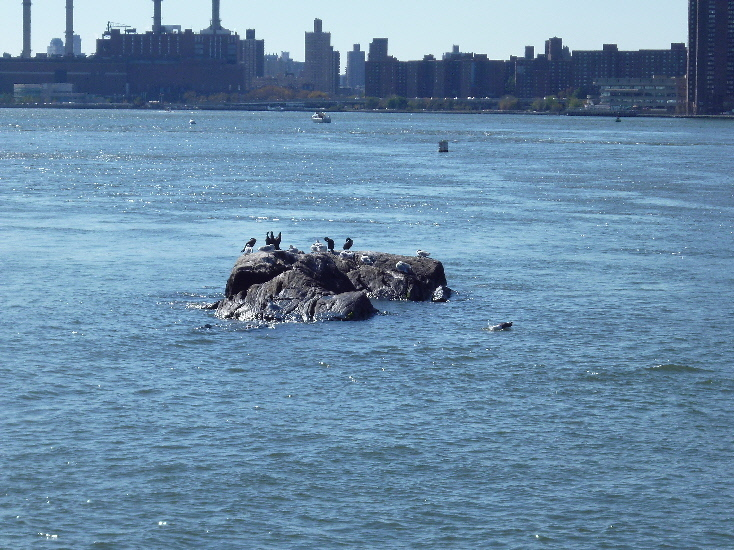 Native new yorkers, East River