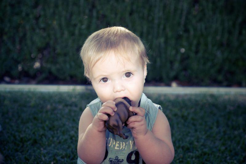 Baby sucking on a toy buffalo