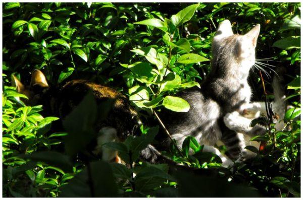 Kittens in hiding