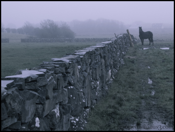 Misty irish evening