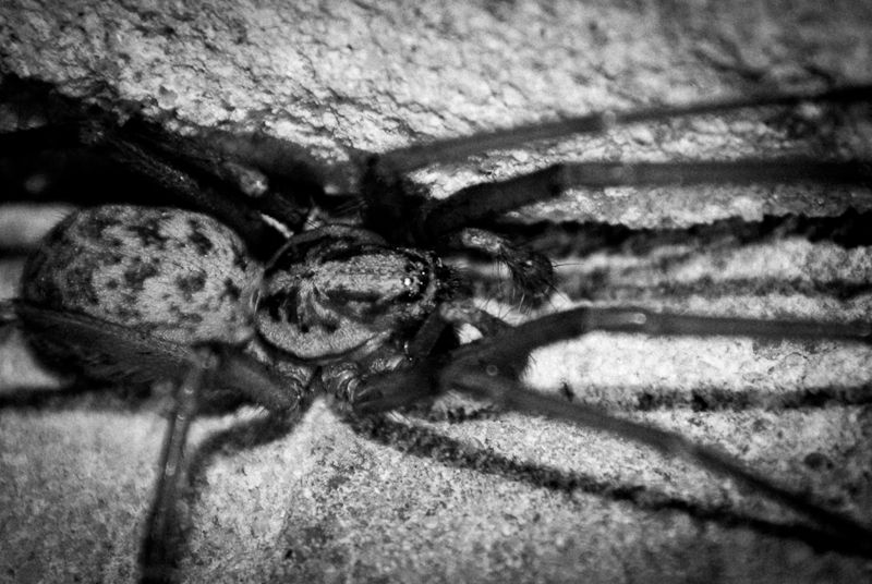 A menacing looking photo of a spider