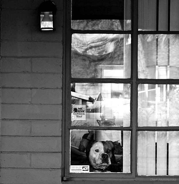 DOG WAITING FOR PEOPLE
